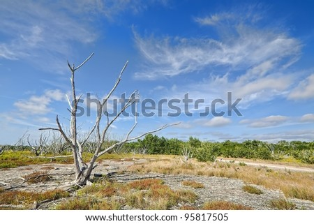 Beautiful view of the Everglades coastal prairies with buttonwood, marl, and Saltwort