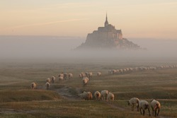 Beautiful view of the famous and historic tidal island of Le Mont Saint-Michel with sheep grazing on fresh green grass fields with early morning lights, in summer, Normandy, Northern France