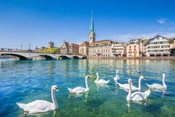 Beautiful view of the historic city center of Zurich with famous Fraumunster Church and swans on river Limmat on a sunny day with blue sky, Canton of Zurich, Switzerland