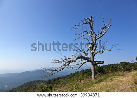 Beautiful view of the popular Blue Ridge  Mountain in Shenandoah national park