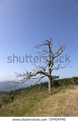 Beautiful view of the popular Blue Ridge  Mountain in Shenandoah national park