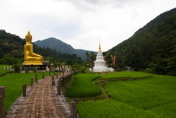 Beautiful view of Wat Na Ku Ha temple has golden Buddha image and white pagoda with bamboo bridge over green rice seedlings field.At farming village in peaceful valley on rainy season. Thailand Phrae.