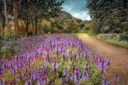 Beautiful View on a Path Dotted with Beautiful Purple Flowers. National Botanical Garden. South Africa.