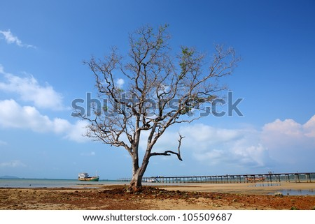 Beautiful view on oak tree at beach, thailand