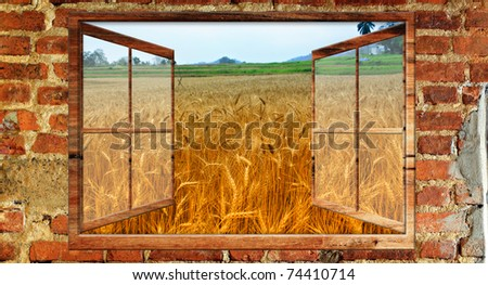 Beautiful view over a window of Wheat field