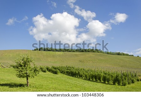 Beautiful view over vineyard landscape on a sunny summer day