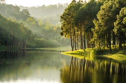 beautiful view reflection of pine forest in lake