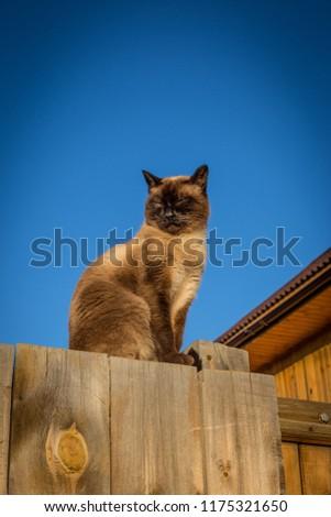 beautiful village cat dozing on the fence