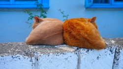 beautiful village cats, under the windows of the house, sleeping on a brick fence huddled against each other