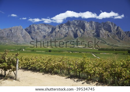 Beautiful vineyard along the wine route in Western Cape, South Africa. Mountains in background.