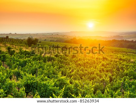 beautiful vineyard landscape in sun light