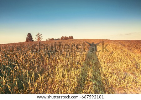 Beautiful vintage field and tree landscape with sunset or sunrise light. #667592101