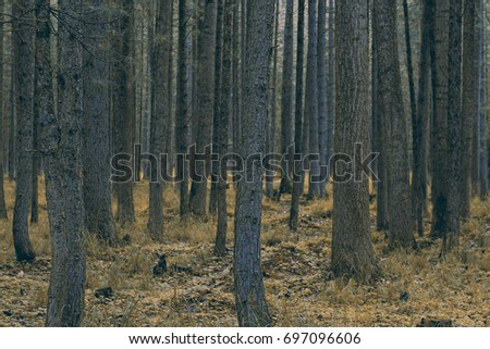 beautiful vintage forest