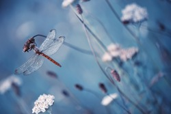 Beautiful vintage nature scene with dragonfly outdoor on wet morning.