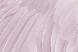 Beautiful violet - mauve  mistkeys colors tone feather texture background, trends color