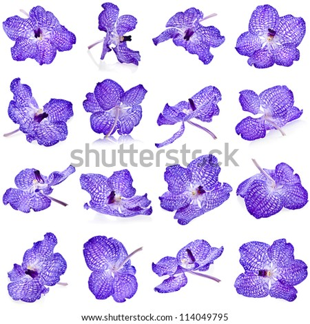 Beautiful Violet Orchid Bud , Collection Set Close Up , isolated on white background