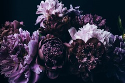 Beautiful Violet peonies bouquet on black. Floral background. Natural flowers pattern.