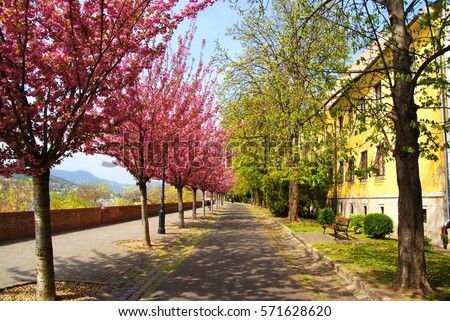 Beautiful walkway with blooming trees in Budapest, Hungary