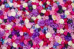 Beautiful wall made of red violet purple flowers, roses, tulips, press-wall, background, valentines day background