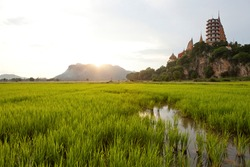 Beautiful Wat Tham Sua (Tiger Cave Temple) in Kanchanaburi surrounded by green of Rice Fields. Scenic View of Rice Fields near Wat Tham Sua. Travel and explore amazing Thailand.