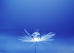 Beautiful water drop on a dandelion flower seed macro in nature. Free space for text. Wallpaper, background, desktop, cover.