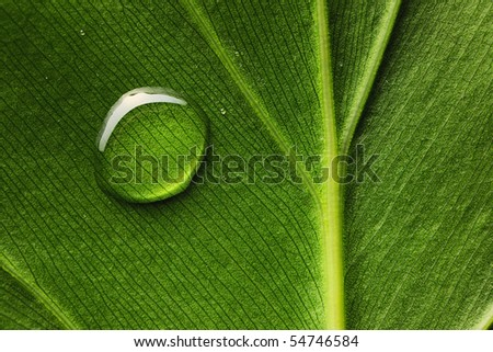 Beautiful water drop on a leaf close-up