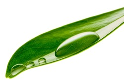 Beautiful water drop on a leaf shoot in macro lens