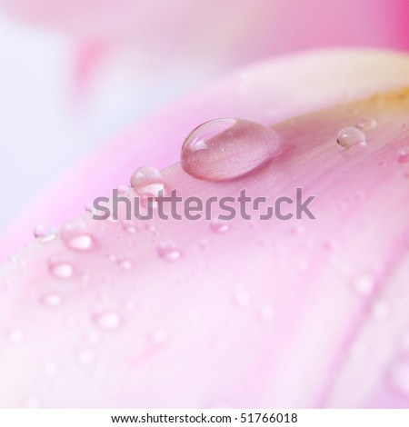 Beautiful water drop on pink petals, super macro