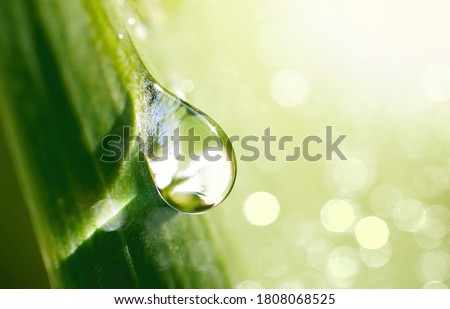 Beautiful water drop sparkle in sun on grass in sunlight, close-up macro. Big droplet of morning dew outdoor, beautiful round bokeh. Amazing artistic image of purity of nature.
