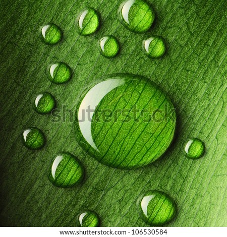 Beautiful water drops on a leaf close-up