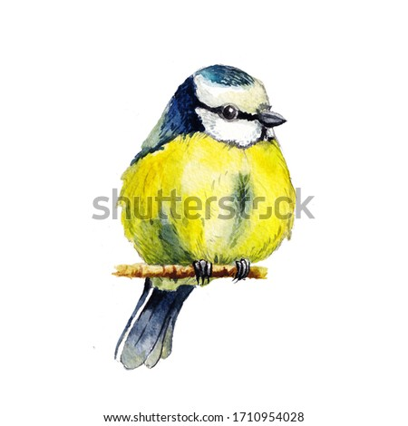 Beautiful watercolor illustration of a great tit isolated on a white background. Can be used for invitations, greeting cards, t-shirts Сток-фото ©