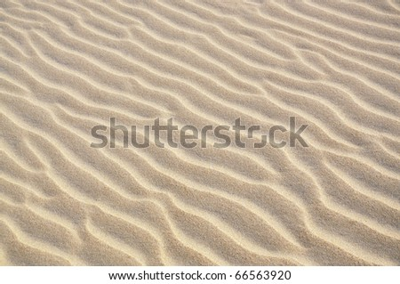 Coastal sand dunes form and function: Pikao (or Pingao