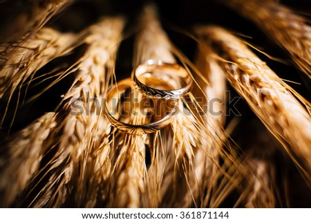 Beautiful wedding rings close up shot on the wheat ears #361871144