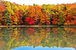 Beautiful West Virginia forest in Autumn