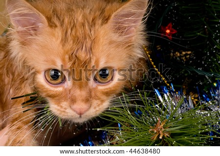 Beautiful wet red kitten playing in a Christmas tree