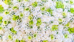 beautiful white and green rose background