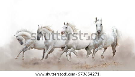 beautiful white arabian horses running over a white background - Shutterstock ID 573654271