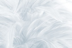 Beautiful White - Baby blue colors tone feather texture background