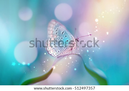 Photo of Beautiful white butterfly on white flower buds on a soft blurred blue background spring or summer in nature. Gentle romantic dreamy artistic image, beautiful round bokeh.