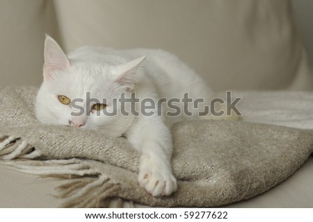 beautiful white cat lying on a blanket
