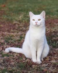 Beautiful white cat portrait sitting in garden.