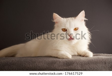 Beautiful white cat relaxing