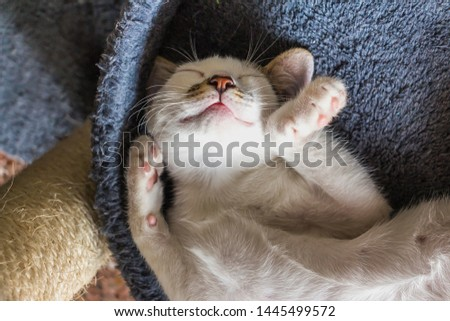 Beautiful white cat sleeping. Concept. Healthy, restful sleep and life. #1445499572