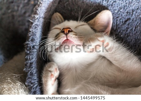 Beautiful white cat sleeping. Concept. Healthy, restful sleep and life. #1445499575