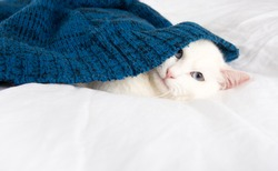 Beautiful White Cat with Blue Eyes Relaxing on Belgian Linen Sheets under Blue Sweater