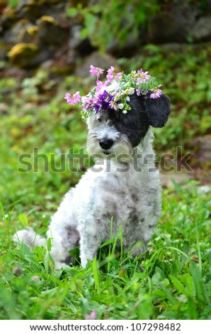 beautiful white dog with garland of forest  flowers