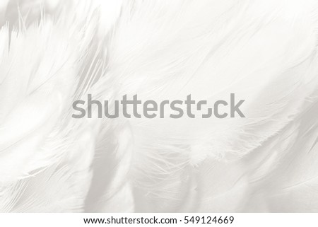 Beautiful white feather texture background #549124669