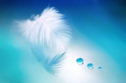 Beautiful white feather with drops  water on blurred background of blue, soft focus. Abstract fresh airy soft artistic image nature, art wallpaper.