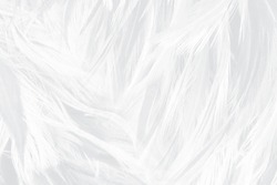 Beautiful white feather wooly pattern texture background
