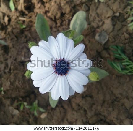 Free Photos Blue Flower Centered Avopix